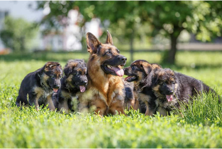 Factors To Consider When Choosing The Right Dog Breeds