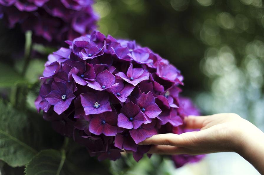 Heaven in Your Garden: Top 5 Flowers to Grow in Your Garden