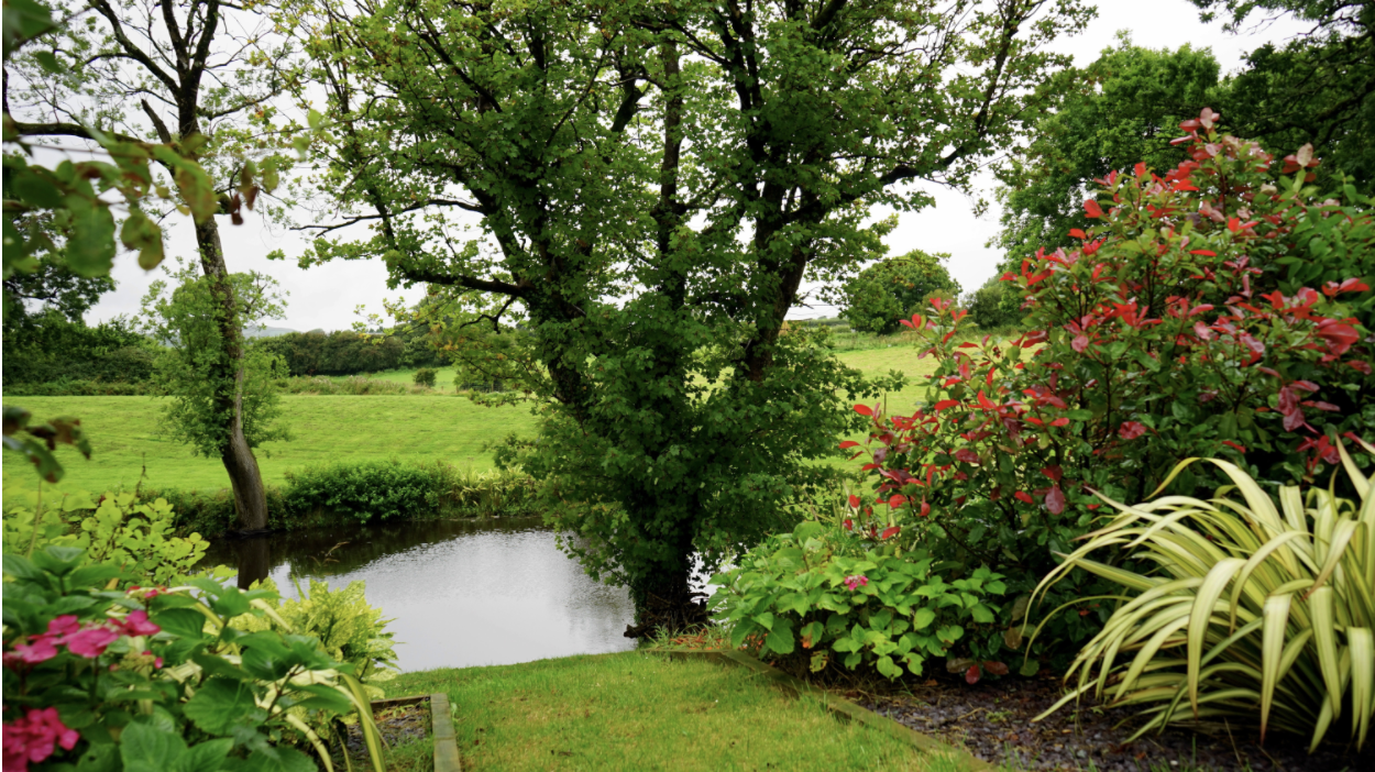 Small Space For a Garden? A Tiny Pond Will Do the Job!