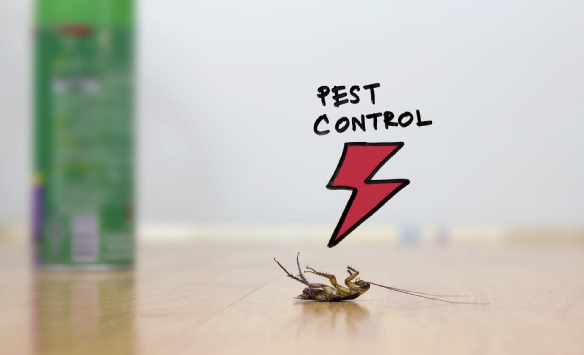 4 tips to prevent pest infestation in your kitchen
